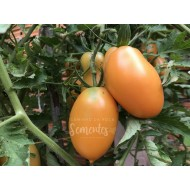 Tomate Orange Enjoyment Orgânico - Solanum lycopersicum
